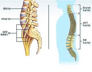 ankilozan spondilit ve artrit hastalığı