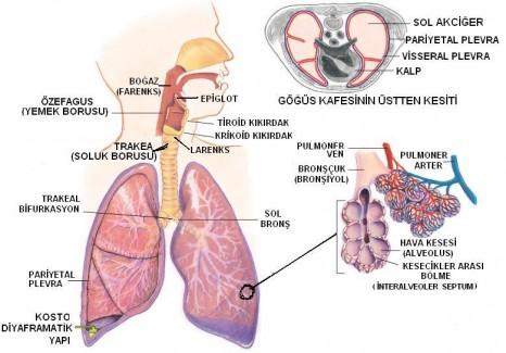 diyafrağma felci nedir ve tedavisi